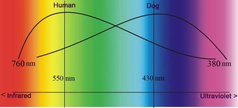 Auge_Hund_Diagramm_engl