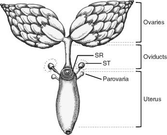Drosophila egg and sperm