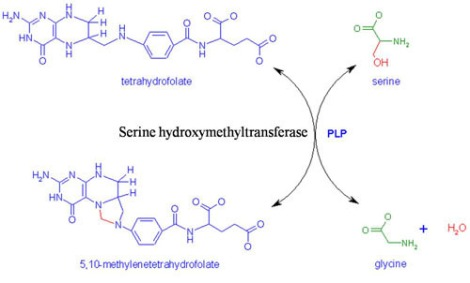 One of the reactions that serine hydroxymethyl transferase catalyzes is the conversion of the amino acid serine to glycine.